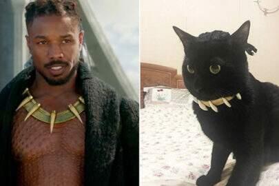 """Gato faz cosplays do vilão de """"Pantera Negra"""" e quebra internet"""