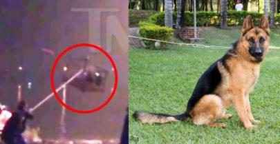 Vídeo mostra cachorro sofrendo maus-tratos em set de filme chinês