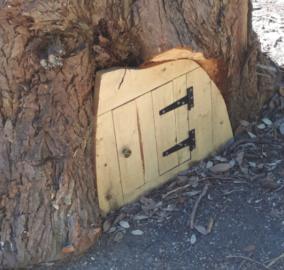 Norte-americano encontra portinha em árvore e mostra o que achou dentro