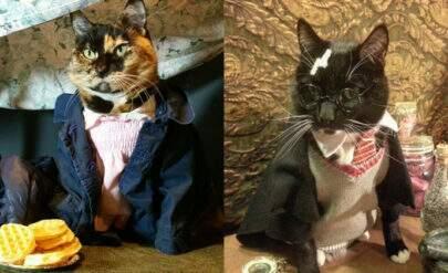 Gatos fazem cosplay de Harry Potter, Eleven e muito mais é a coisa mais fofa do dia