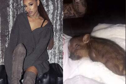 Ariana Grande agora tem um porquinho que é a coisa mais fofa do mundo