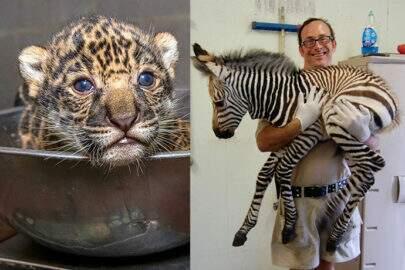 Conheça os filhotes mais fofos (e pesados) do reino animal