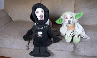 Esses cachorros com 17 fantasias para o Halloween vão derreter seu coração