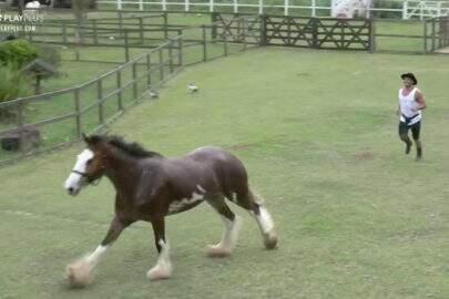 A Fazenda: Durante brincadeira com Lucas, cavalo pisa em galinha e produção corta a transmissão