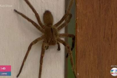 Aranha gigante invade estúdio do 'Mais Você' ao vivo