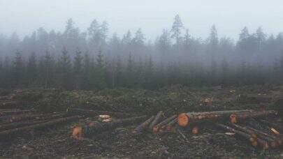 'Até 2030 o desmatamento vai acabar por falta de floresta', diz delegado da PF